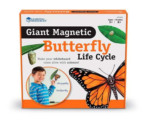 Magnetický vývojový cyklus - Motýl