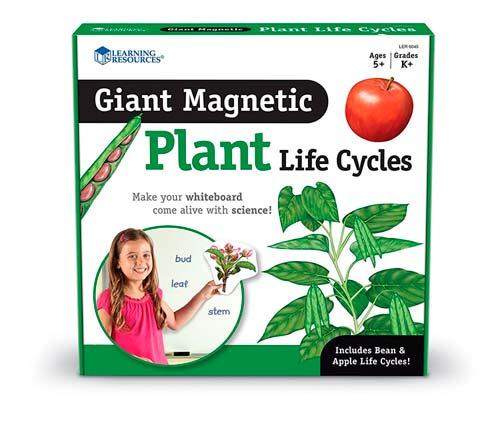 Magnetický vývojový cyklus - Rostlina